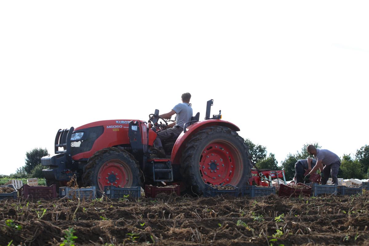 R colte de pommes de terre terres de luisandre - Date recolte pomme de terre ...